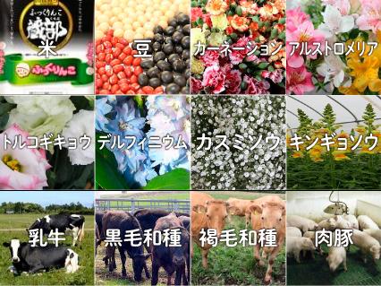 花卉・畜産