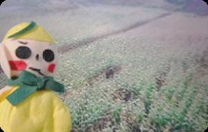 デントコーン畑に熊が!!