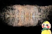 夜の八郎沼
